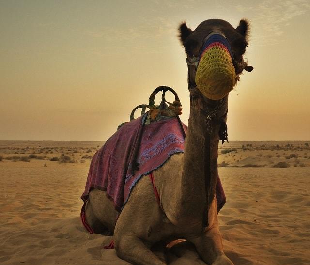 砂漠エリア