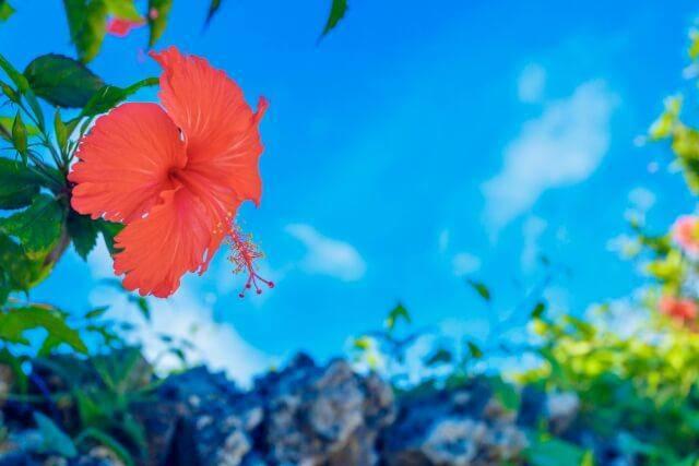 ハワイアン航空利用で機内からアロアを感じて出発!!現地ではさらにハワイを満喫!!