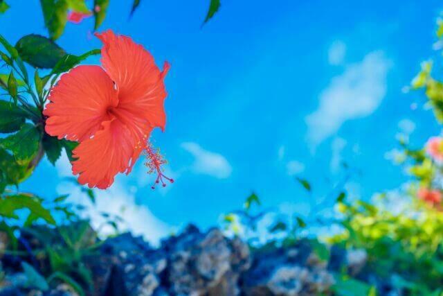 【ラストサマーセール】機内からアロハ気分が盛り上がるハワイアン航空直行利用!座席数限定特別プライス!