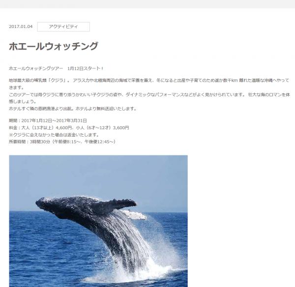 クジラに会えなかった場合は返金!ホエールウォッチングツアー