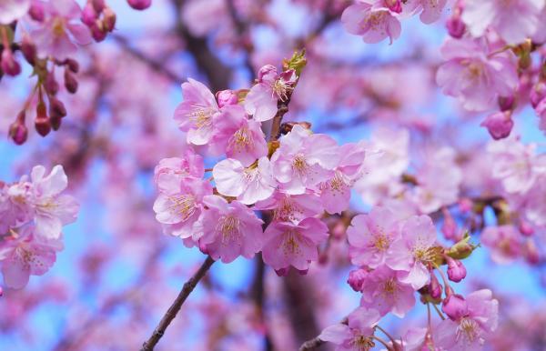 おすすめのお花見スポット5選
