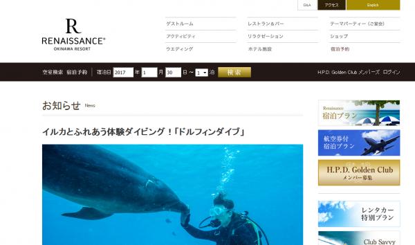 海の中でイルカに会える体験ダイビング「ドルフィンダイブ」