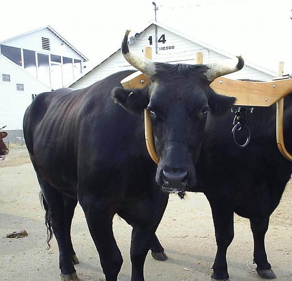 闘牛の楽しみ方