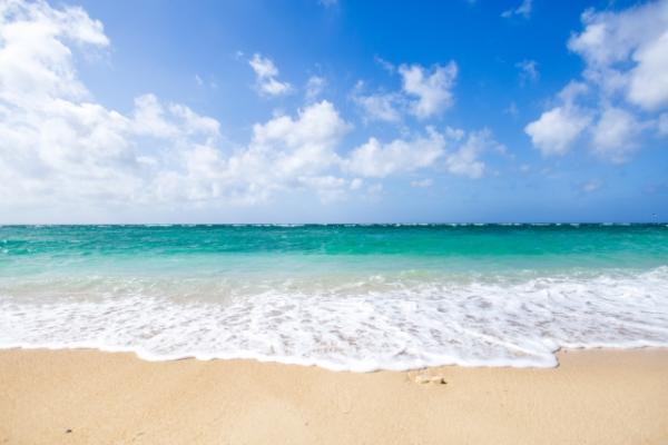 沖縄に潜む危険生物