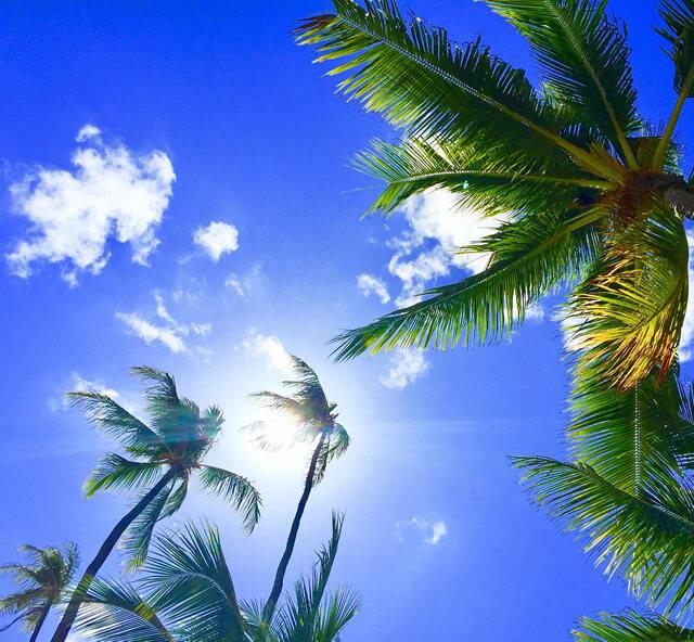 ハワイで夏をもっと楽しもう!