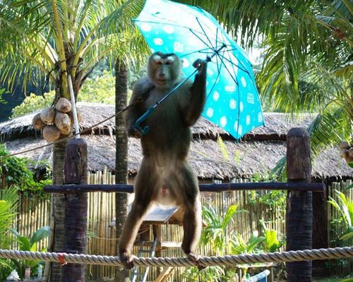 プーケット動物園2