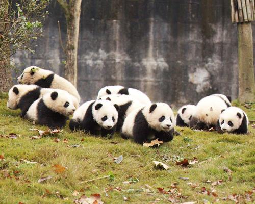 四川省ジャイアントパンダ保護地域1
