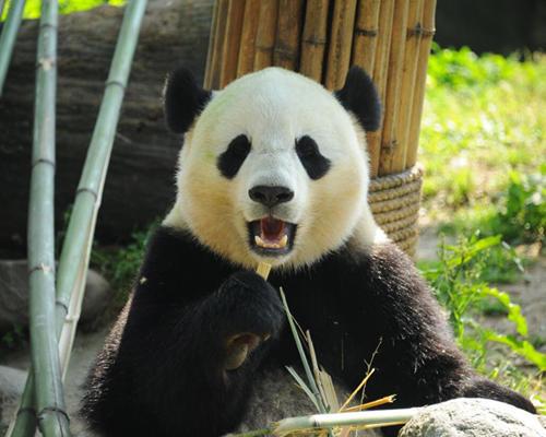 四川省ジャイアントパンダ保護地域3