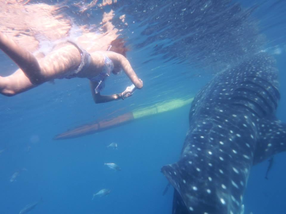 セブ島でジンベイザメと泳ぐ~現地ガイドが疑問にお答え!~
