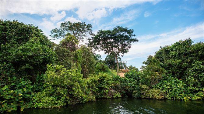 シンガポール旅行で絶対行きたい!3大動物園の魅力と見どころを徹底解説