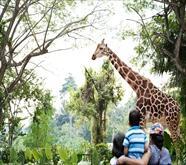 シンガポール3大動物園特集
