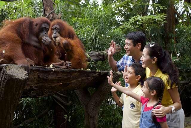 \大人も子供も大満足間違いなし!!/シンガポール動物園プラン♪