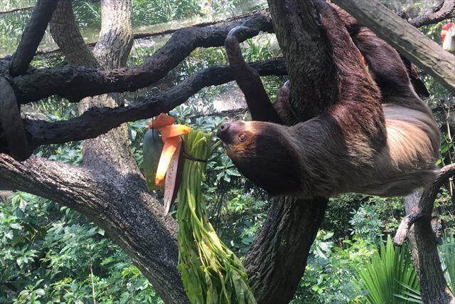 \お子様連れや家族旅行に超おすすめ!/シンガポール観光地で大人気のスポット・3大動物園組み込みプラン予約受付中♪